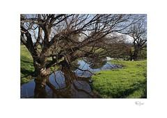 Creek (radspix) Tags: sony ilcea7r 3570mm smc pentax af zoom f28