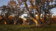 Book Keepers Hut (Jacqui Barker Photography) Tags: wilpenapound flindersranges southaustralia southaustraliaoutback australia australianoutback stationlife oldbuildings australianhistory bookkeepershut