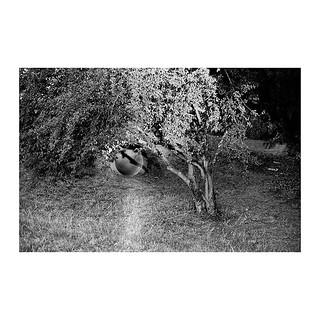 . . . . . #shootfilm  #filmphotography  #bw  #bwfilm  #streetphotography  #filmcommunity  #nikon  #nikkor  #nikonf2  #micronikkor  #nikkor50mm  #fomapan  #foma  #fomapan100  #fomapan100  @400 @fomapanfilm @adox_official #rodinal  #push  #pushfilm  #border