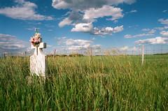 lone prairie grave (daisygraves) Tags: 35mm 35mmfilm 35mmfilmphotography film filmphotography analog filmisnotdead analogphotography canada prairies rural summer graveyard grave cemetery cross