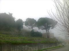 Brouillard sur la route (Gilbert-Noël Sfeir Mont-Liban) Tags: nebel nebbia brouillard fog strase route road bäume arbres trees kesserwan montliban liban mountlebanon lebanon