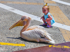What's that mummy (tubblesnap) Tags: cyprus paphos holiday panasonic lumix bridge camera lightroom pelican harbour young girl toddler bird curious