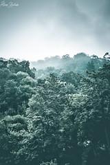 Montañas nubladas (Álvaro Hurtado) Tags: nikon d7200 sigma naturaleza nature paisaje landscape asturias españa spain oviedo monte mount montaña mountain picos europa niebla fog mist verano summer árboles trees cielo sky luz light verde green