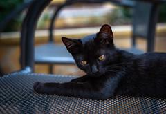 Black kitten ... (Julie Greg) Tags: animal kitten cat black canon5dmarkiv canon eyes details
