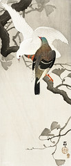 Two pigeons on a branch (1900 - 1910) by Ohara Koson (1877-1945). Original from the Rijks Museum. Digitally enhanced by rawpixel. (Free Public Domain Illustrations by rawpixel) Tags: animal antique art asian bird drawing illustration japan japanese koson ohara oharakoson old paint pigeons vintage
