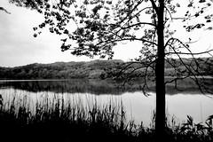 Calmness (shou yokoya) Tags: bessat monochrome voigtlănder nokton 40㎜ 400tx kodak trix analogue film 35㎜ 135
