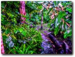 garden paradise (Iqbal Osman1) Tags: jungles garden natura rainpathways healing mercy beauty logs leaves palms