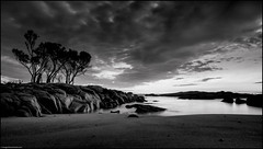 The Witness Stand (niggyl (well behind)) Tags: bayoffires eastcoasttasmania sthelens allocasuarinaverticillata sheoak devoniangranite lichen oxide seascape landscape sunrise sonyilce7rm2 sony sonya7rii sonyalpha7 a7rii a7riisony emount samyang rokinon samyang24mmf14edasumc rokinon24mmf14edasumc samyang2414 rokinon2414 breakthroughfilters breakthroughphotography breakthroughx4 longexposure ndfilter breakthroughphotographyx46stopndfilter wideangle ultrawideangle wideangleprimes primelens monochrome blackandwhite lowkeyblackandwhite etherealblackandwhite luminar2018 skylumsoftware binalongbay breathtakinglandscapes bw