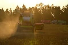 DSC_7627 (anetaležáková) Tags: summer sunset summerharvest sunnydays harvest agriculture agriphoto czechagri caseihpuma case casepuma165 caseoptum casepuma200 claas claaslexion newholland