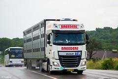 DAF XF116.460 / Breeders (DK) (almostkenny) Tags: lkw truck camion ciężarówka dk danmark denmark livestock bp57199 daf xfeuro6 xf116 ssc superspacecab breeders