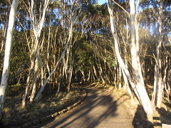 Mount Macedon, Victoria (d.kevan) Tags: trees plants grasses rocks woods parksandgardens australia victoria mtmacedon mtmacedonregionalpark trunks branches people paths
