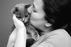 Ollie Kiss (Zé Castro) Tags: animal castro d800 josé nikon cat ollie blackandwhite monochrome photography cute british kitten kitty family pet scottish shorthair fold blackwhite kiss tenderness