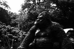 Gorilla (Jim Davies) Tags: gorilla betwsycoed snowdonia conwy olympus om10 slr 50mm ferrania p30 film filmfilmforever analogue photography veebotique 35mm 35mmfilm blackandwhitefilm bw blackandwhite monochrome uk wales summer july 2017