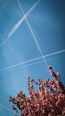 (Stefano Rebecchi [gtsix]) Tags: îledefrance france spring sky flowers tree condensation trails