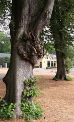 20180804 Nienoord 02 (janhommes) Tags: borg castle groningen estate