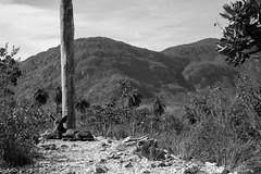 Serra do Cipó-MG (Johnny Photofucker) Tags: serradocipó minasgerais brasil cerrado cão preto branco black white pb bw nero bianco noiretblanc 24105mm monochrome dog cane chien