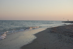 Another Day Has Gone (melleus) Tags: man sea evening sunset nature gull bird water waves sand summer outdoors sky