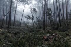 Dark fog (jorgeverdasca) Tags: canonphotography 5dmark4 canonphotos gothic goth trees youtube vlog vlogging mist fog foggy beautiful darklight dark bosque landscape woodland floresta forest sintra portugal