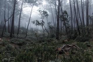 Dark fog