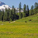 Alpine Spring thumbnail