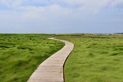 The bendy boardwalk (ole_G) Tags: boardwalk capecod wellfleet