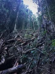 Landslip in Springbrook NP (flashmick) Tags: queensland bushwalk bush bushwalking springbrook july winter 2018 burrigan mountain rainforest slip landslide creek