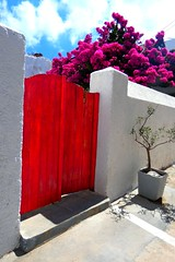 Red gate and bougainvillea (Marite2007) Tags: cyclades villages cycladic greece milos plaka details architecture colors colourful vivid vibrant bougainvillea gate wooden