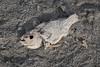 Salton Sea, California 2018 (monoauge) Tags: 1855mm 2018 fuji fujixt2 fujifilm fujifilmxt2 usa xt2 saltonsea salzsee california kalifornien southcalifornia niland fish fishbones fischskelett fisch salt salz street streetshot streetphotography