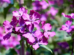 once again flowers April (uiriidolgalev) Tags: once again flowers april