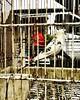 """""""Vi ho sentito fischiare. Usciamo da questa jungla, seguitemi!"""" -254 #artcontemporain #artcontemporary #urban #photography #photographer #artphotography #città #city #arte #artecontemporanea #arteconcettuale #conceptual_art_gallery  #paolomarianelli#stree (paolomarianelli) Tags: city paolomarianelli turn clouds marketing artphotography mercato birdfreefly streeart arteconcettuale fly volare sun graffiti mondo world conceptualartgallery città artistcommunity arte artecontemporanea artcontemporary photography sky work bird urban spring girare artcontemporain photographer viaggio travel"""
