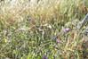 Ψίνθος (Psinthos.Net) Tags: ψίνθοσ psinthos spring άνοιξη απρίλησ απρίλιοσ nature countryside φύση εξοχή χόρτα greens drygrass ξεράχόρτα φύλλα leaves sunnyday day μέρα ηλιόλουστημέρα φώσ light μαλάχη μολόχα μολόχεσ mallow marshmallow marshmallows mallows purpleblossoms purpleblossom μώβάνθη μώβάνθοσ μώβανθόσ άγριαλουλούδια αγριολούλουδα wildflowers flowers flower λουλούδια λουλούδι wildflower herb βότανο χωράφι field μπουμπούκια buds άγριολουλούδι αγριολούλουδο