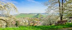 Kirschbaumblütenwiese (Markus Lenz) Tags: deutschland diewelt europa fotografie genre kirsche naturlandschaft orte pflanze pflanzen pflanzenfotografie streuobstwiese weibertreu weinsberg wiese kirschbaumblüte bäume kirschblüte obstbäume cherry blossom