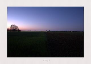 Falling night in crops