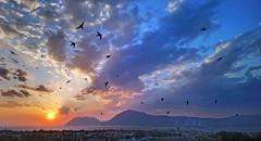 Swallow's View (GEORGE TSIMTSIMIS) Tags: swallowbirds gathering evening bluehour bridge rionantirrion patras greece travel androidphotography sonyxperiaxa1ultra g3212 sonyg3212 sun mountains varasova klokova blue red yellow shadows figures