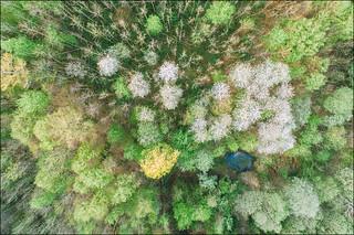 Spring Potpourri II