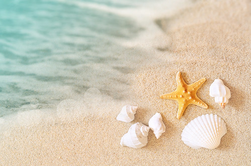 """Starfish on the beach. Summer beach. • <a style=""""font-size:0.8em;"""" href=""""http://www.flickr.com/photos/151084956@N05/40928790204/"""" target=""""_blank"""">View on Flickr</a>"""