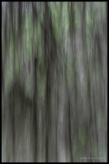 Oak Tree_Spanish Moss_ICM (Kimberly Sibbald) Tags: icm intentionalcameramovement blur oak spanish moss savannah georgia bonaventure chiggers
