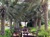2005_09_20-30_UAE_152_0 (MakMcs) Tags: дубай оаэ пустыня фуджейра шарджа