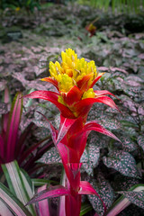 Red and yellow (dharder9475) Tags: 2018 closeup flower plant privpublic red shallowdepthoffield yellow
