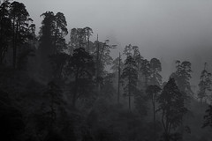 Light, Mist and Trees - 3 (Ravikumar Jambunathan) Tags: clouds cold cumulus forest himalayas india lachen landscape life light majestic mist moonsoon mountain mountains nature outdoor ravikumarjambunathan sikkim sky snow strom sunlight sunrays summit travel trees valley weather white winter