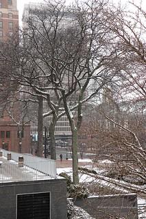 urban trees - Hartford