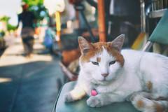 Friendly Feline (Ian Sane) Tags: ian sane images friendlyfeline store cat chair southeast hawthorne portland oregon bokeh mellow street urban photography canon eos 5ds r camera ef1740mm f4l usm lens bokehwednesday