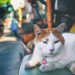 Friendly Feline thumbnail