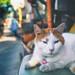 Friendly Feline