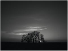 Mínima luz (una cierta mirada) Tags: sunset landscape land sky sun tree trees nature dark night black bnw bw blackandwhitephotography blackandwhite panasonic dmcgx8 lumix g vario 1260f3556