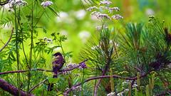 Peace & Quiet, Hartley Nature Center - Duluth MN USA, 07/22/18 (TonyM1956) Tags: elements sonyalphadslr hartleynaturecenter duluth nature tonymitchell minnesota stlouiscounty sonyphotographing