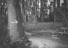 op - nature trail (johnnytakespictures) Tags: olympus pen ee3 ferrania filmferrania p30alpha p30 blackandwhite bw panchromatic film 35mm analogue nuneaton warwickshire hartshillhayes hartshill trail nature natural tree trees woodland forest arrow point pointing direction painted paint path pathway walk countrypark countryside country park gardens bark trunk