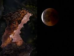 teich. kosmos. blutmond. (blindlings848) Tags: macro tele bloodmoon teich kosmos