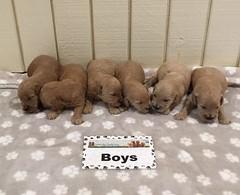 Kasey Boys pic 3 7-28