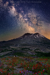 Cosmic Bloom (pdxsafariguy) Tags: sky landscape nature night mountain stars volcano washington mtsthelens mountsainthelens flowers usa wildflowers mountsthelens flower meadow wildflower giffordpinchotnationalforest milkyway tomschwabel